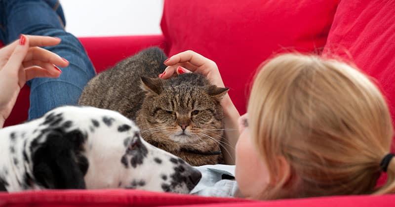 Kann der Vermieter Haustiere verbieten?