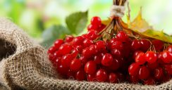 Die Roten kommen – rote Beeren für die Sommerküche