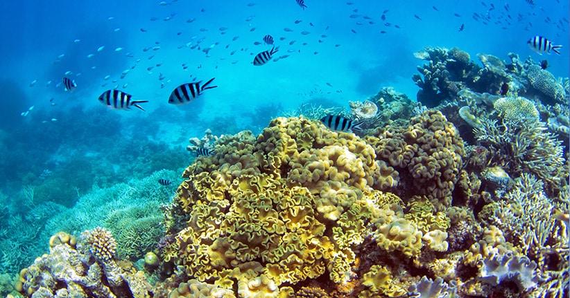 Rettungsplan für das Great Barrier Reef vor Australien