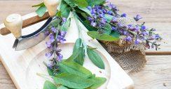 Mit Blüten kochen – duftend und lecker