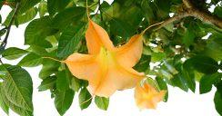So schön, so giftig – Giftpflanzen in heimischen Gärten