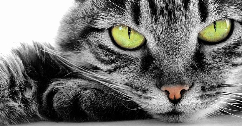 Weltkatzentag – Skurriles über den Stubentiger