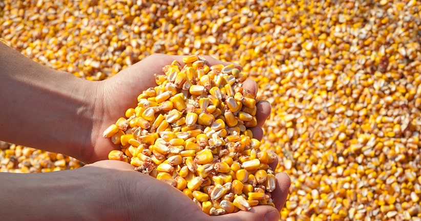 Saatgutbank Global Seed Vault hat erste Anfrage