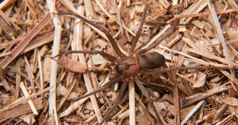 Mann verliert durch Spinnenbiss fast sein Bein
