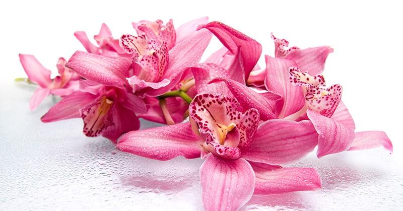 Orchideen – die heimlichen Königinnen der Blumen