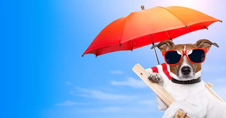 Tipps gegen die Sommerhitze