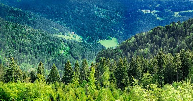 Parkhotel Adler – fünf Sterne Urlaub im Schwarzwald
