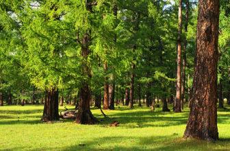 Zirbenholz – die nachhaltige und gesunde Alternative
