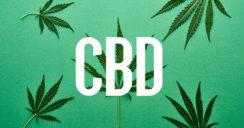 Hype um CBD – was ist dran an dem Wundermittel?